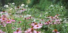 bostuin Apeldoorn - Denkers in TuinenDenkers in Tuinen | Ontwerpers van stijlvolle en tijdloze tuinen