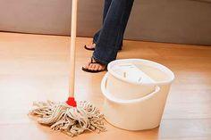 Elimine baratas e formigas com venenos caseiros