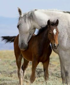 A Mother's Love! Wild mustang mare and her foal in Sand Wash Basin. Happy Mother's Day to all mothers! Photo by Nadja Rider