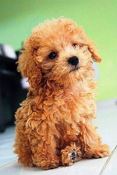 Top 10 Longest Living Dog Breeds
