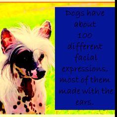 Animal fact!
