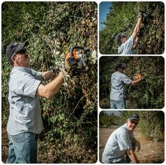 Today was trim the perimeter fence line hedges, briars, blackberry, etc... once a year I have to cut it back otherwise it gets thicker and thicker... and at over 3 meters tall,  it makes an excellent second layer of security in addition to my acma fence topped with razor wire.