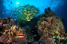 A James Cook University researcher has found more than three quarters of Australians regard the Great Barrier Reef as part of their national identity and nearly 90 per cent believe it is under threat from climate change.