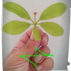 Porque inauditas sao as minhas borboletas e mágicas suas aparições.   (Jota Freire)