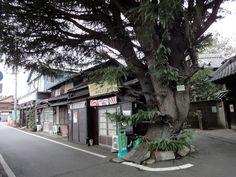 yanaka-tokyo-1, Yanaka. An old Tokyo neighborhood untouched by time.