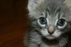 Sweet grey baby