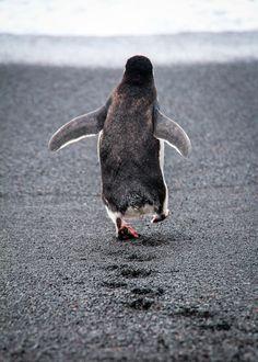 Penguin Walk by François Lemmens on 500px
