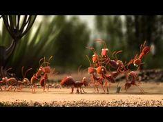 ¿Por qué las hormigas y los cangrejos viajan en grupo?  Os presentamos dos originales vídeos, en los que se utilizan animaciones con animales, realizados por la empresa pública belga Lijn De para fomentar el uso del transporte público.