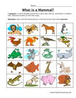 Mammal Classification Worksheet: Look at all the animal pictures. Circle the pictures that show mammal. Information: Classifying Worksheet. Classification Worksheet.