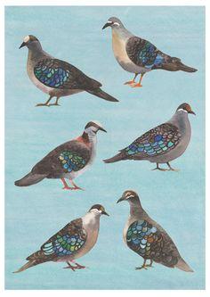 Bronzewing Pigeon Fine Art Print Natalie Ryan / meander designs