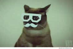 i like this cat