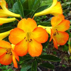 10 Great Tropical Plants for Auckland