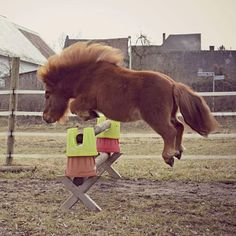 Jump like nobody is watching ❤️ #equestrian #horse #equestrianperformance