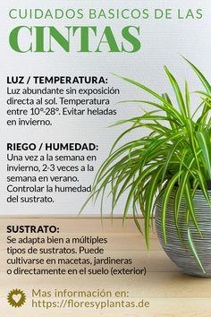 Floresyplantas Floresyplantasde Perfil Pinterest