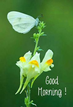 Good Morning Flowers Quotes, Very Good Morning Images, Good Morning Image Quotes, Good Morning Wishes, Hindi Books, Cute Good Night, Beautiful Flowers, Hair Care, Gallery