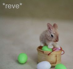 OOAK Realistic Miniature ~ Baby Rabbit ~ Handmade 1:12 Sculpture * Reve #Handmade