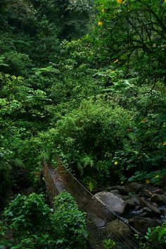 Jungle bridge, Parc National de Guadeloupe