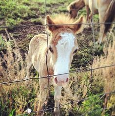 SHE IS THA CUTEST THING OH NOW ISNT SHE JUST THA HORSES FEATHAH