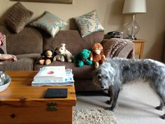 Dylan the talk twenty 1 dog with a small selection if his toys!