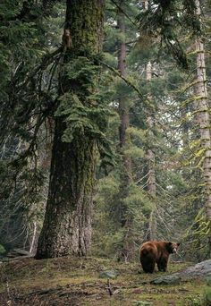 ours brun nature life on earth forest bear Wildlife Photography, Animal Photography, Wild Photography, Hiking Photography, Photography Jobs, Photography Classes, Beautiful Creatures, Animals Beautiful, Bear Cubs