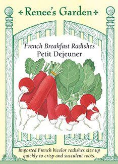 Radishes  French Breakfast Petit Dejeuner Seeds * See this great product.