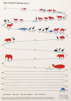 "Data visualization infographic & Chart Infographic: How long do animals live? Infographic Description ""How long do animals live?"" by ISOTYPE – Gfx Design, Graphic Design, Information Graphics, Art Graphique, Data Visualization, Just In Case, Fun Facts, Knowledge, Timeline Infographic"