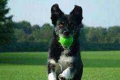 5_dog_training_0_1339322014