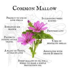 Mallow Plant, Mallow Flower, Magic Herbs, Herbal Magic, Plant Magic, Fertility Spells, Real Love Spells, Flower Chart, Magic Crafts