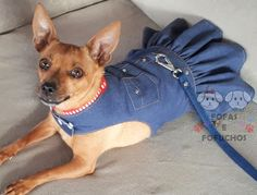 Dog Raincoat, Pet Fish, Dog Clothes Patterns, Recycle Jeans, Puppy Clothes, Dog Wear, Old Jeans, Dog Dresses, Dog Coats