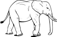 24 Best Y Blank Pattern Elephants Images Coloring Pages Elephant