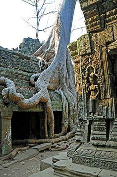The forgotten kingdom - Ta Prohm Temple, Cambodia (by archer10)