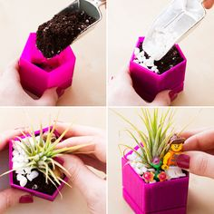 Use potting soil, assorted pebbles, and air plants to make these fun terrariums.