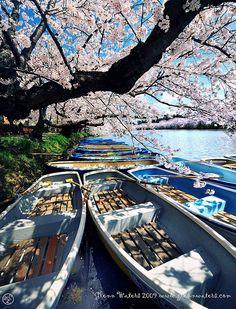 Memories of Spring, Japan