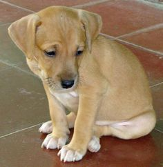 The Daily Puppy Risa the Mixed Breed
