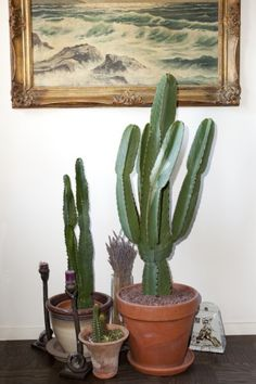 cacti for u cacti for me
