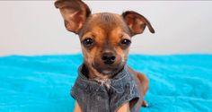 Hola soy Mimi │GIF mimi │perra de german │la perra de german│ estupido humano │mascotas de German Garmendia│Gifs de Hola soy German