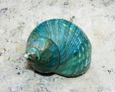 Shell of ocean colours
