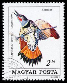 Hungría 1985- Una especie de Pájaro Carpintero
