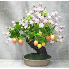 Prunus Artificial Bonsai Tree  	  Magnificently created to look just like a flowering prunus tree, this amazing artificial bonsai has shimmering pink leaves and multi-colored fruit.
