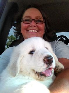 Wookie, my Great Pyrenees pup the day we brought her home 2013