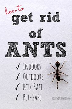 It's that time of year when ants are everywhere! Here's how to get rid of ants indoors and out using methods and ingredients that are kid and pet-safe! Ant Remedies, Home Remedies For Ants, Health Remedies, Natural Remedies, Natural Ant Repellant, Essential Oil Ant Repellant, Essential Oils, Big Black Ants, Sugar Ants