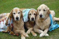 Ty, Brie and Ben .. wishing with paws crossed that  I will let them swim a little longer :D