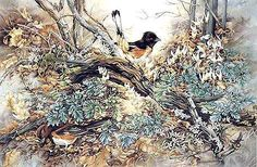 Barbara Krans Jenkins ---- Towhee and Dutchman's Breeches in colored pencil