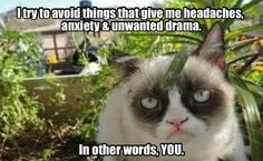 Wellness tips from Grumpy Cat.
