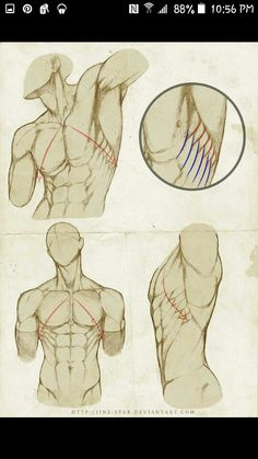 10 Best Anatomy Muscle Poses Images Anatomy Body Reference Drawing Muscle