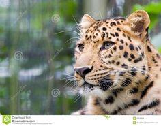 Image result for free jaguar images