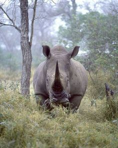 FIGHT FOR THEM!!!!!..STOP THE POACHING!!!!!!