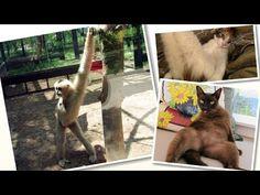 Los Animales pueden ser Muy Sexys, Si no lo crees mira esto