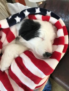 I NEED THE BLANKET FOR MY PUPPY!!!!