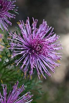 purple #flowers